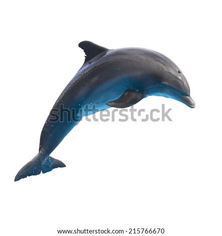 single jumping  bottlenose dolphin isolated on white background - stock photo