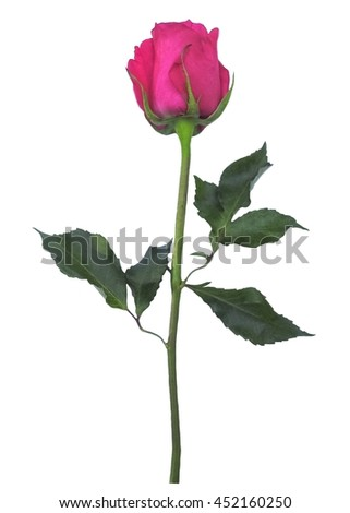 Single Rose Stock Photos, Royalty-Free Images & Vectors ...  Single Rose Sto...