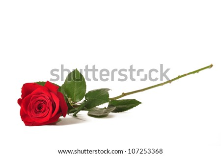 Single long stem red rose against a white background - stock photo