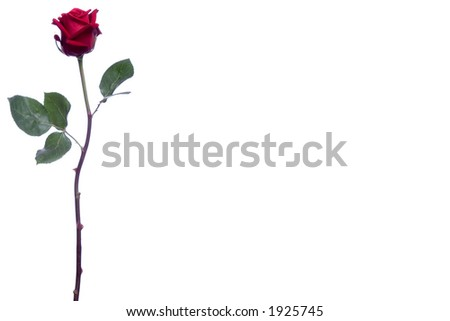 Long Stem Roses Stock Images, Royalty-Free Images & Vectors ...