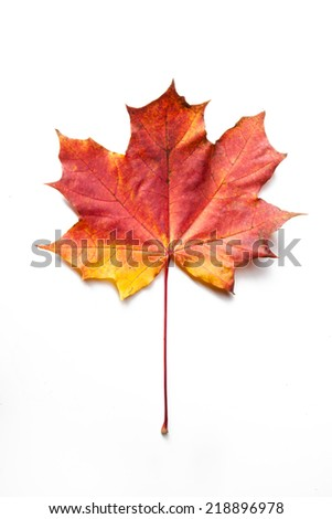 Single maple autumn leaf, isolated - stock photo