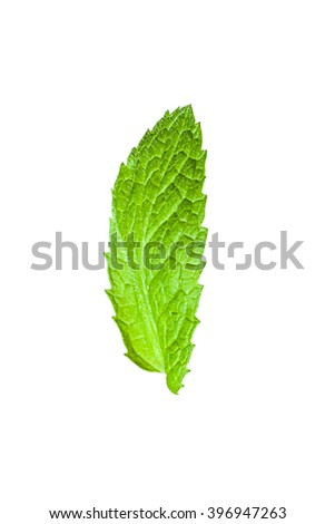 Single mint leaf isolated on white background