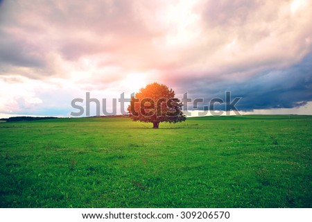 single oak tree in field under magical sunny sky - stock photo