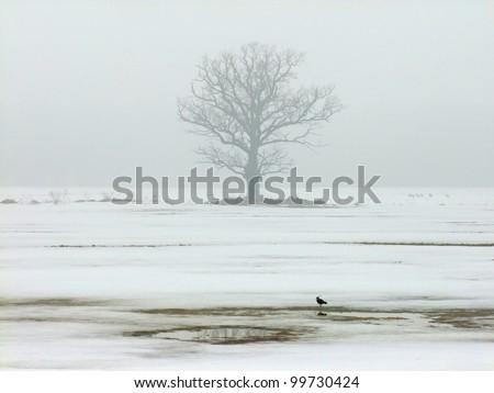 Single oak tree in winter on a foggy afternoon - stock photo