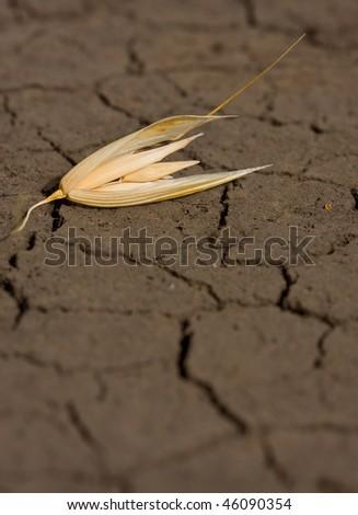 Single oat grain on waterless soil background - stock photo