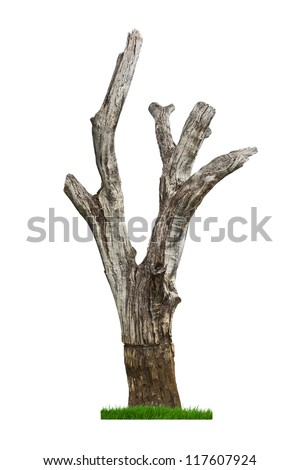 Single old and dead tree and fresh grass isolated on white background. - stock photo