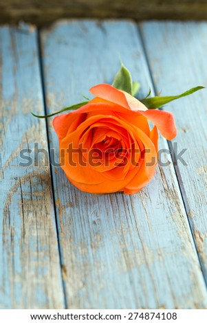 single orange rose on vintage turquoise wooden background with copy space - stock photo