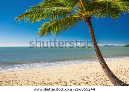 Single palm tree at Palm Cove beach in north Queensland, Australia - stock photo