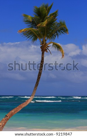 Single palm tree in front of the ocean