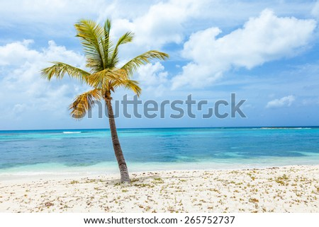 Single palm tree on tropical beach on Mustique Island.