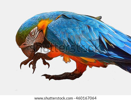 Single  parrot Blue-and-yellow macaw  close up  isolated on white                   - stock photo