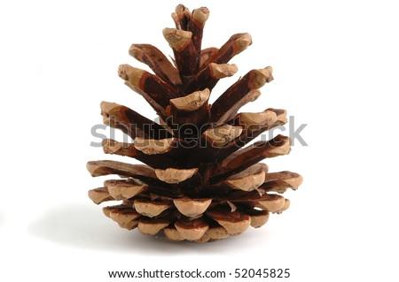 single pine cone, isolated - stock photo
