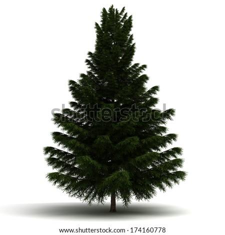 Single Pine Tree - stock photo