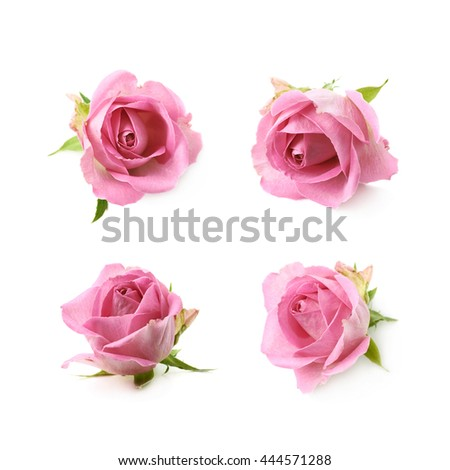 Single pink rose bud isolated over the white background, set of four different foreshortenings