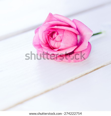 single pink rose on white wooden background with copy space - stock photo