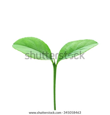 single plant isolated on white