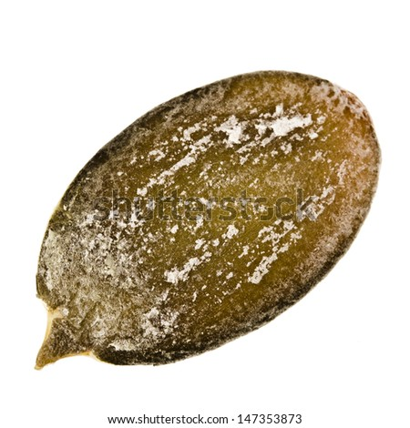 Single pumpkin seed peeled  close up macro shot isolated on white background