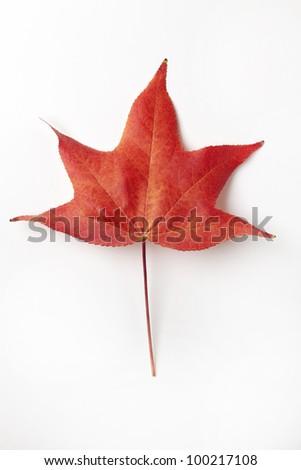 Single Red Liquidambar Tree Leaf - stock photo