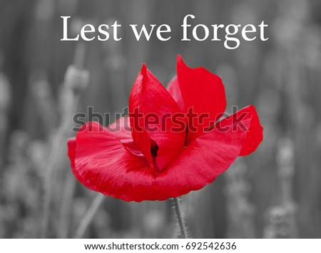 Single red poppy defocused black white stock photo royalty free single red poppy with a defocused black and white background of flowers and leaves with lest mightylinksfo