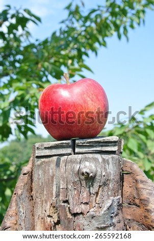 Single red ripe apple on a cut tree, on a sunny summer day. Concept of target, nature, environment, clean/healthy eating. - stock photo