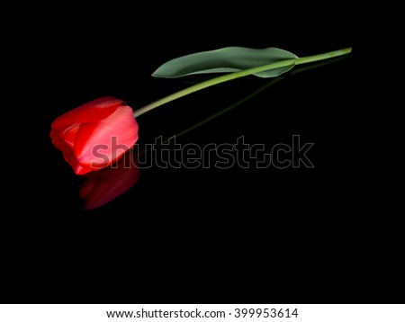 Single red tulip with raindrops like tears. Lying on shiny black background with reflection. Ideal tribute, memorial, bereavement message etc. With copy space.   - stock photo