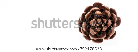 Single round pine cone isolated on white background