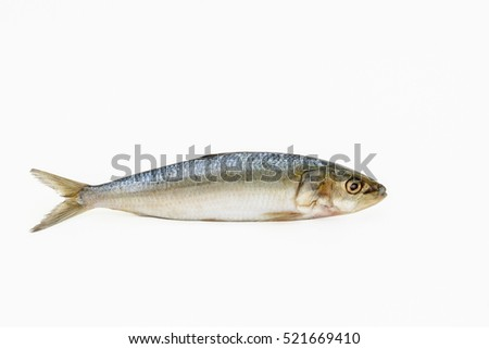 Single Sardine fish on a white background