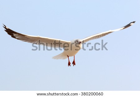 Single Seagull flying in blue clear sky.