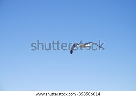 Single Seagull flying in blue clear sky and bright sun