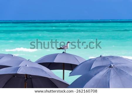 Single Seagull resting on beach umbrellas on Miami Beach, Florida, USA. - stock photo