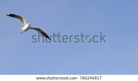 Single seagull soaring into the air
