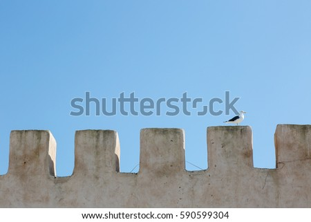 Single seagull standing on old wall in crown shape in day light on blue sky background