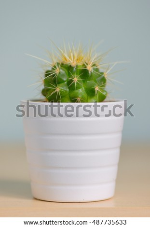 Single small decorative cactus in a pot