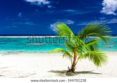 Single small palm tree on a sandy Rarotonga beach, Cook Islands - stock photo