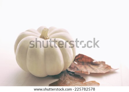 Single small white pumpkin with two autumn leaves on wooden board.   - stock photo