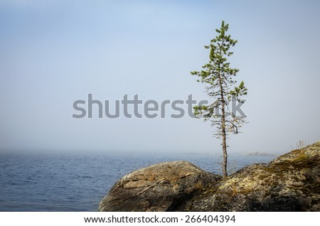 single thin pine on the stones in the mist - stock photo