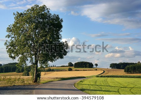 Single Tree and curved road in an Ardennes Landscape in the Grand Duchy of Luxembourg. - stock photo
