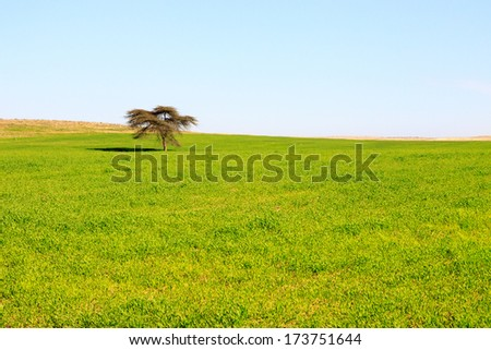 Single tree in a green meadow under bright sky - stock photo