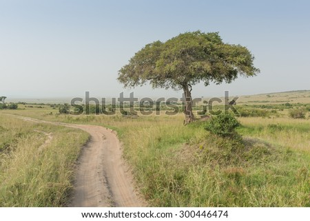 Single tree in african savannah and a dirt road