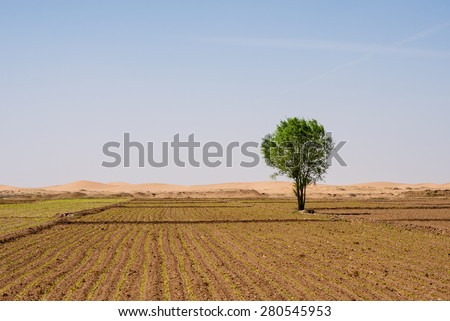 single tree in farm land
