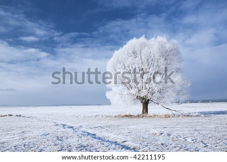 Single tree in frost and landscape in snow against blue sky. Winter scene.