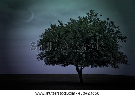 single tree in rural field with moon and stars in twilight sky