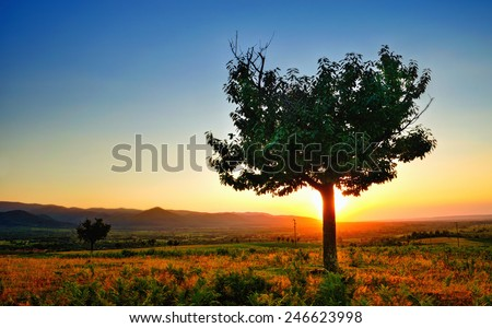 Single tree in sunset light - stock photo
