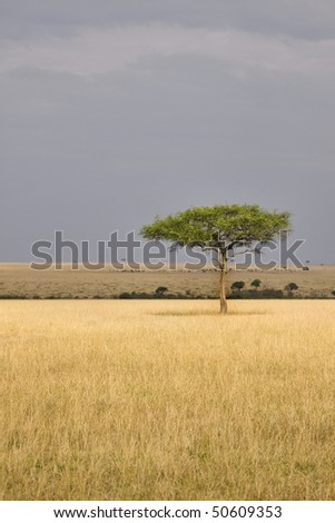 Single tree in the middle of vast African plains. - stock photo