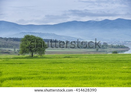 Single tree on a green grass meadow with mountain, lake, blue sky and clouds as background. The focus is on the grass. - stock photo