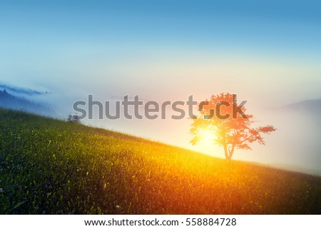 Single tree on hill and morning sky in mountain.