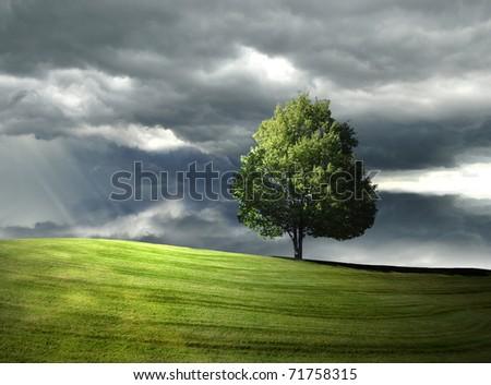 Single tree on the hill - stock photo