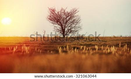 single tree on the horizon and the sun - stock photo