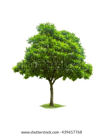 Single tree on white isolate background with clipping path.