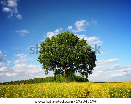 Single tree, rapeseed field and sky horizontal - stock photo